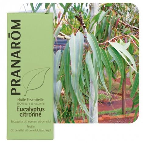 Huile essentielle d'Eucalyptus citronné