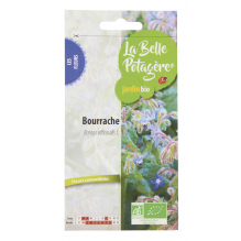 Bourrache officinale - Borago officinalis L. - 2g